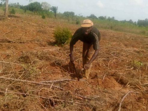 Sézouhlon paysan wogba 493x370 - Reportage/ A la campagne: une journée avec les paysans de Wogba