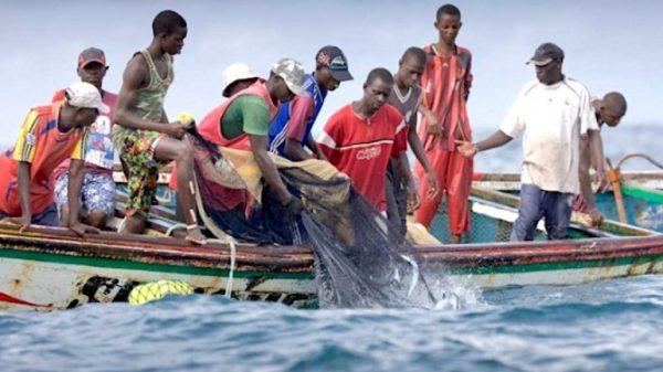 Technique Watcha pêche 600x337 - Les techniques de pêche en mer au Togo: le «Watcha» ou la pêche à la senne tournante
