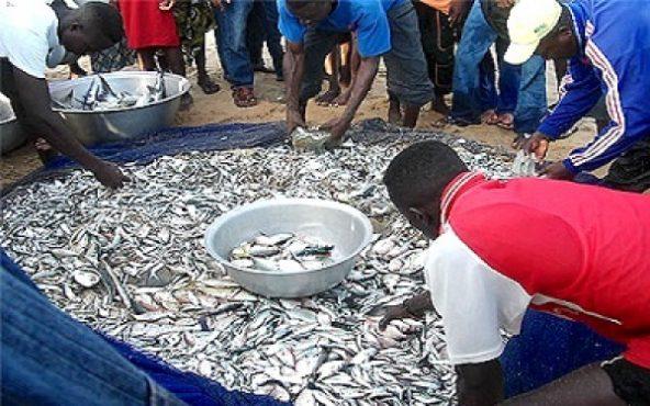 pêche abondance 592x370 - Togo/Pêche: de l'abondance à la traversée du désert