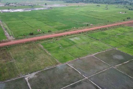 Aménagement hydroagricole de Mission Tové 555x370 - Agriculture: ZAAP, agropoles, aménagements hydro-agricoles, dessouchage, la stratégie de l'Etat pour mettre en valeur les terres arables