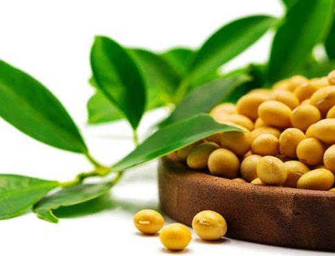 soja bio bon 484x370 - Togo, 5ème pays africain exportateur de produits bio vers l'UE en 2019