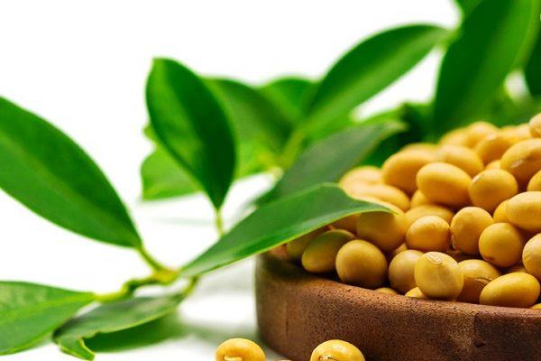 soja bio bon 600x400 - Togo, 5ème pays africain exportateur de produits bio vers l'UE en 2019