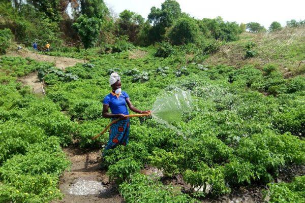 Kara AGR 600x400 - Togo: 938 jeunes de la région de la Kara s'auto-emploient grâce au projet EJV