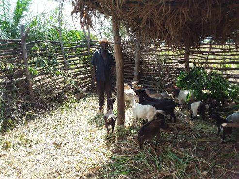 Lakte Pataki 493x370 - Togo/: A Koudjodolou (Assoli), les jeunes s'en sortent grâce au projet EJV