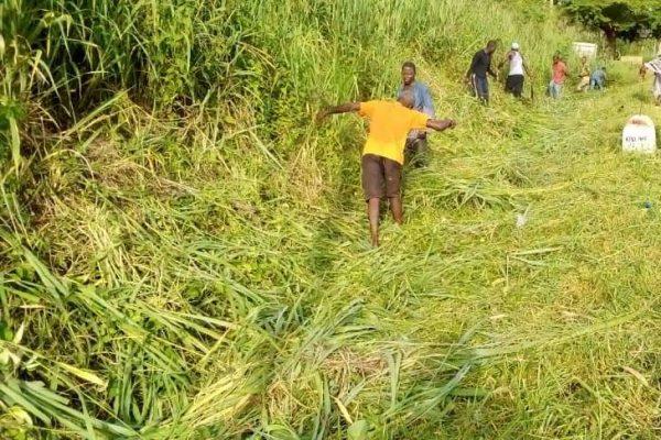 cantonnage archives bon 600x400 - Togo/ Cantonnage dans la région Centrale: 1 254 Km de voie entretenus en 2020
